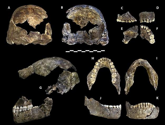 Vad är datering av fossil